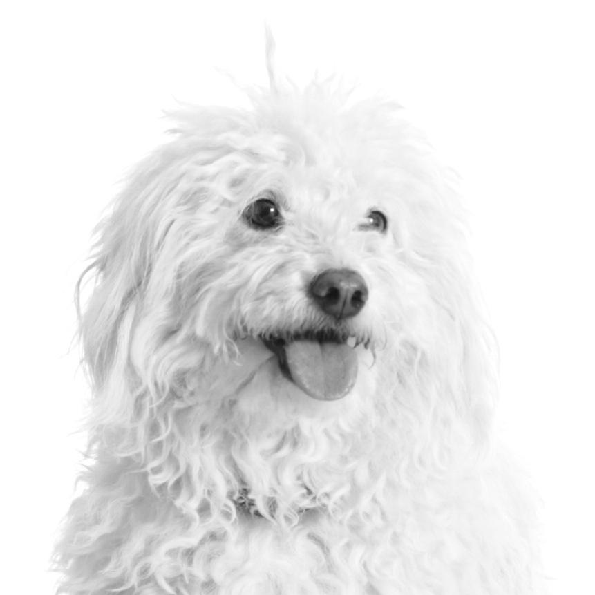 Lola Senfhund